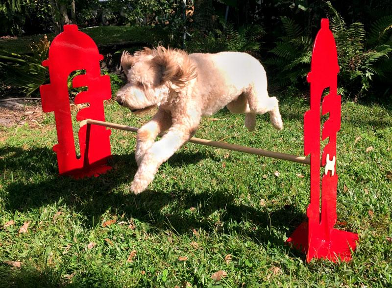 dog agility hurdles