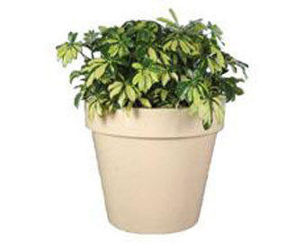 Tampa Style Planters with Various Sizes, Finishes & Colors Available